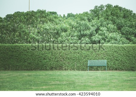 Hedges and chairs in the garden  - stock photo