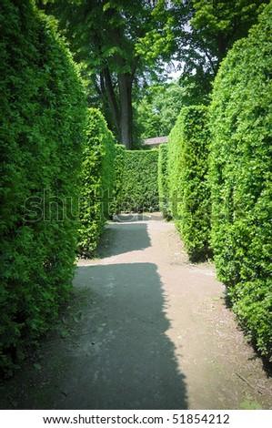Hedges labyrinth - stock photo
