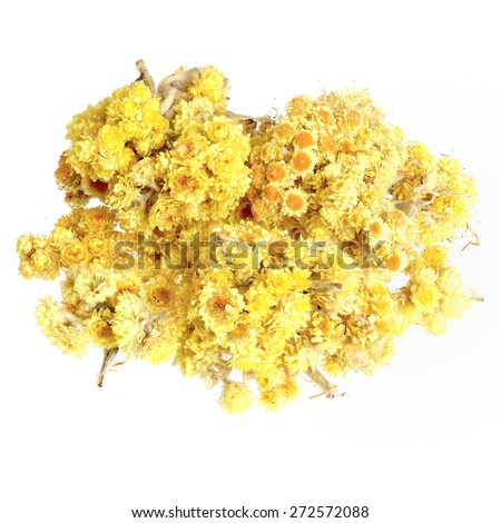 Helichrysum flowers isolated on white. - stock photo