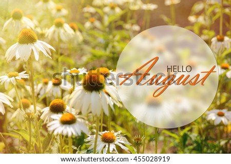 Hello August Wallpaper, Summer Garden Background With Big Flowers In  Sunshine