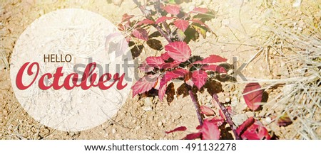 Hello October Wallpaper, Autumn Background With Red Leaves