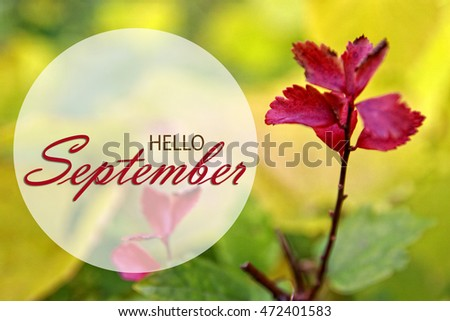 Hello September Wallpaper, Autumn Background With Red Leaves