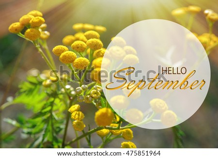 September Stock Images, Royalty-Free Images & Vectors  Shutterstock