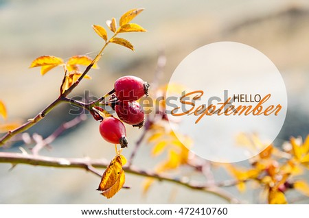 Charmant Hello September Wallpaper, Autumn Background With Yellow Leaves And Rosehip