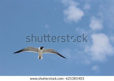 HELLO SPRING, WATCHING SEAGULL FLYING ON SKY enjoy holiday at Pensacola beach Florida