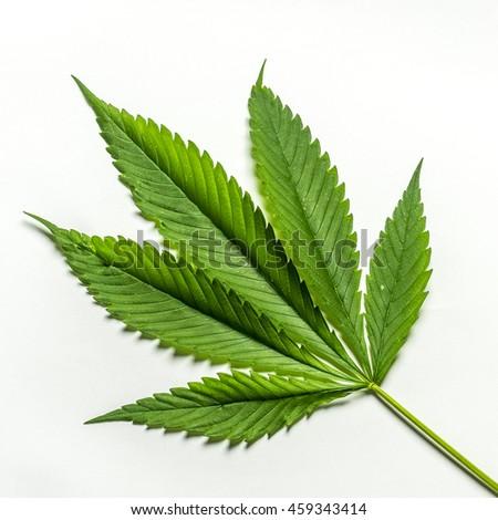 Hemp Leaf, Cannabis, Smoking - stock photo