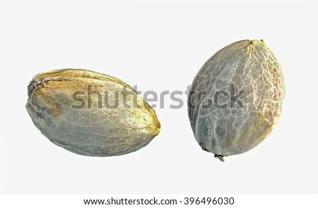 Hemp seeds isolated on a white background - stock photo