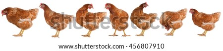 Hen eggs isolated on white background. - stock photo