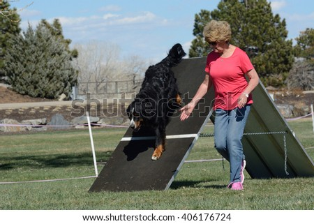 Henderson, Colorado, USA - April 4, 2016: Bernese Mountain Dog and handler performing the A-frame in Novice Regular Class at Mountain Dog Sports NADAC dog agility trial
