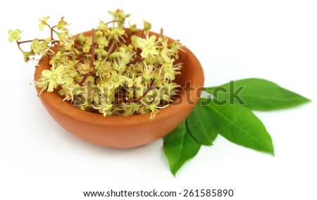 Henna leaves with flower on a pottery - stock photo