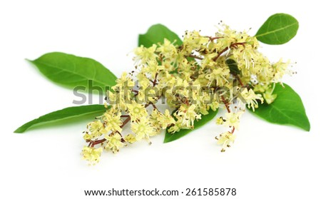 Henna leaves with flower over white background - stock photo