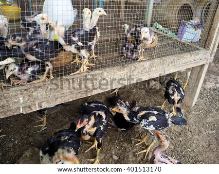 Hens in cage and hens at outside - stock photo