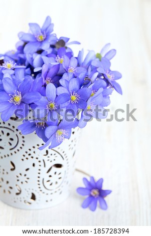 hepatica nobilis flowers on wooden surface - stock photo