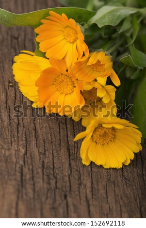 herb a calendula on a wooden board  background - stock photo