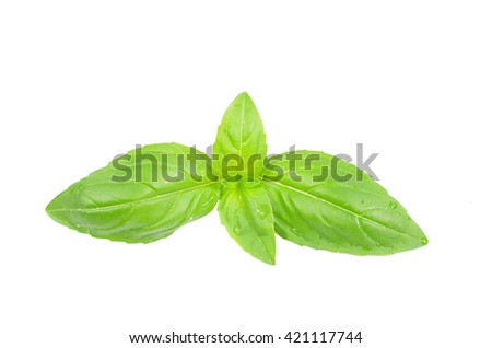 herb basil on white background - stock photo