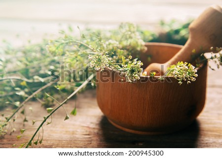 Herb capsella in mortar with pestle on wooden background, side view, medicinal herb - stock photo