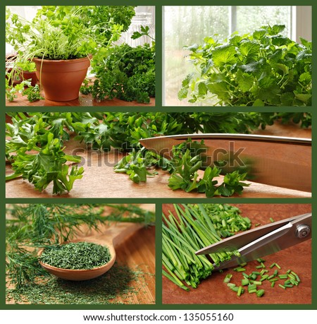 Herb collage includes images of parsley, chives, dill, lemon balm, and a kitchen garden. - stock photo