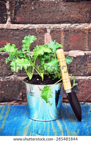 Herb garden, baby kale, vegetable and herb garden, pots, buckets and gardening tools on a brick wall background - stock photo