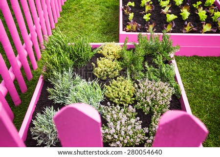 Herb garden. Pink raised beds with herbs and vegetables. Trendy garden design - stock photo