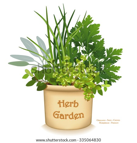 Herb Garden Planter. clay garden flowerpot crock with gourmet cooking herbs, left to right: Italian Oregano, Sage, Chives, Flat Leaf Parsley, Sweet Marjoram, isolated on white.  - stock photo