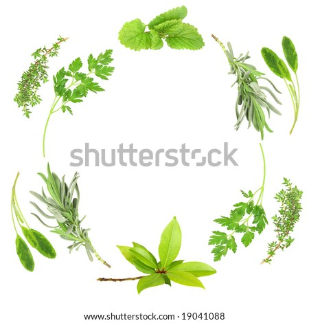Herb leaf abstract circular design of lavender, sage, parsley, bay, lemon balm and thyme, over white background.