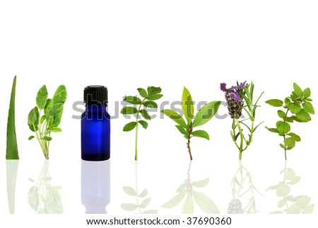 Herb leaf and flower selection with an aromatherapy essential oil glass bottle, over white background with reflection. - stock photo