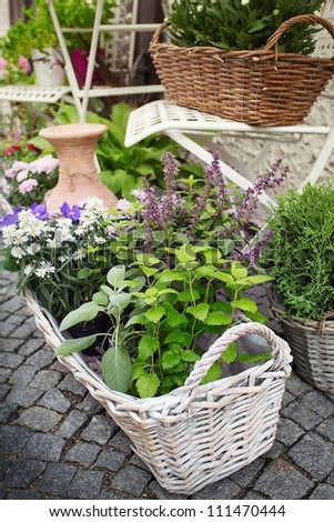 Herb leaf selection in a rustic wooden basket including, rosemary, purple and variegated sage, lemon balm, oregano and flower - stock photo