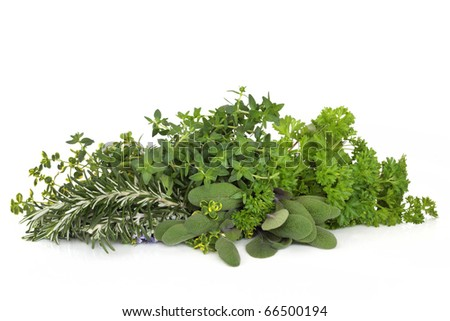 Herb leaf selection of parsley, thyme, sage and rosemary with flowers  isolated over white background. - stock photo