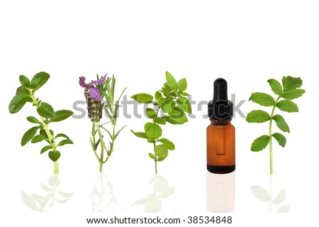 Herb leaf selection of peppermint, lavender, oregano and valerian with an aromatherapy essential oil glass dropper bottle,  over white background.