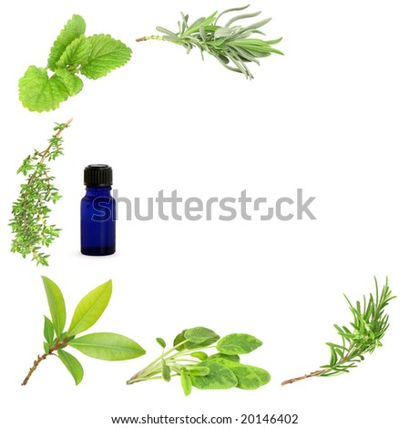 Herb leaf sprigs of lavender, lemon balm, thyme, bay, sage and rosemary forming a border with an aromatherapy essential blue glass oil bottle to one side, over white background. - stock photo