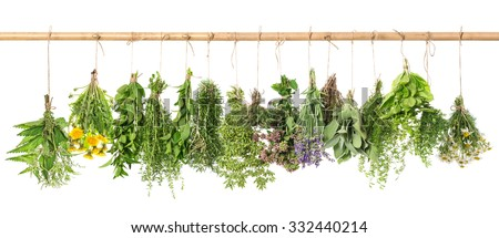 Herbal apothecary. Fresh herbs hanging isolated on white background. Basil, rosemary, sage, thyme, mint, oregano, marjoram, savory, lavender, dandelion, chamomile, nettle - stock photo