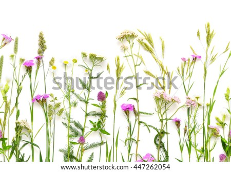 Herbal seamless border. Flat lay of wildflowers on white background. Floral horizontal composition