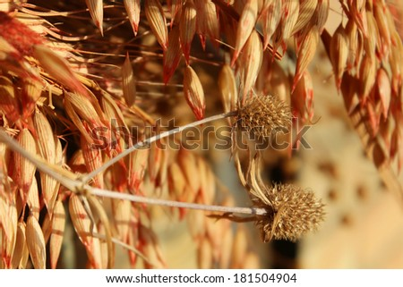 Herbarium of dried plants and flowers and buds