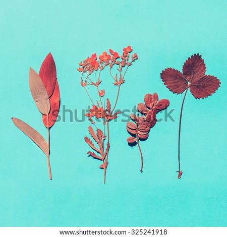 Herbarium on blue background. minimal style - stock photo