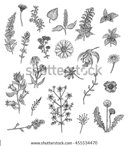 Herbs flowers black white ink drawings stock illustration 455534470 herbs and flowers black and white ink drawings raster format mightylinksfo