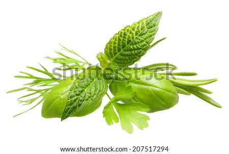 Herbs. Basil leaves, dill herb, rosemary spice, mint isolated on white background. - stock photo