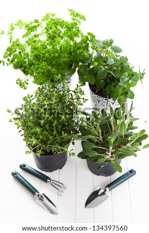 Herbs for planting with garden tools - stock photo
