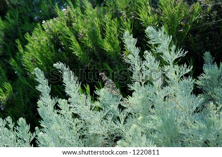 herbs grow on a mountain top in southern italy - stock photo