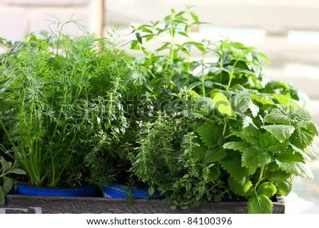 herbs growing - stock photo