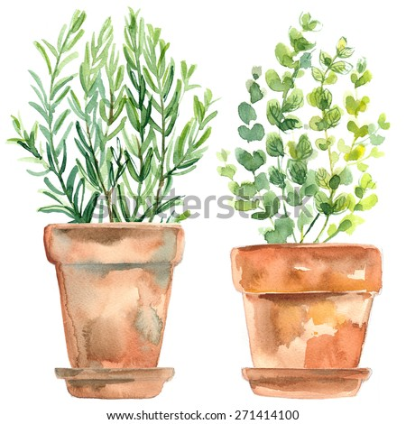 Herbs in a flowerpot. Oregano in a pot. Rosemary in a pot. Herbs painted with watercolors on white background - stock photo