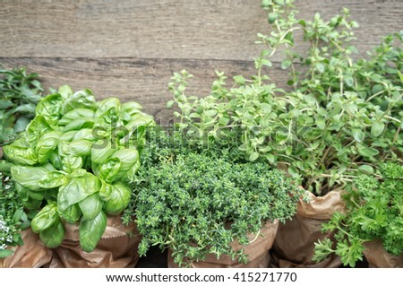 Herbs in plant pots with copy space - stock photo