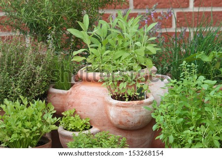 herbs in pots - stock photo