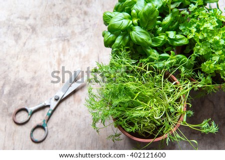 Herbs in pots/toned photo - stock photo