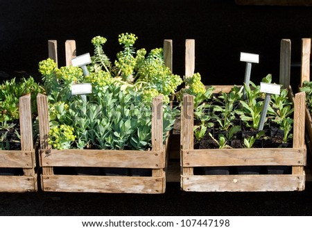 Herbs in wooden boxes in the market
