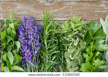 herbs on wooden background/lavender/ - stock photo