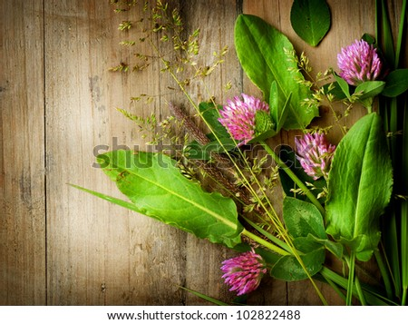 Herbs over Wood. Treatment Plant. Herbal Medicine. Herbal Background. - stock photo