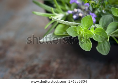Herbs still life.  With oregano, lavender, rosemary, thyme, sage and basil, over blurred background. - stock photo