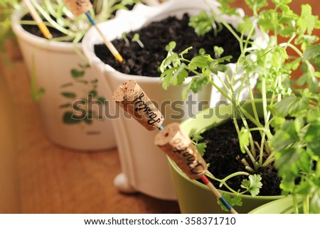 Herbs with markers growing in pot  - stock photo