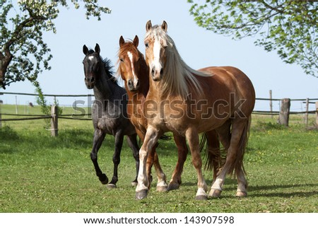 Herd horses running on pasture - stock photo