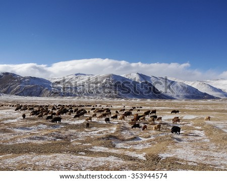 Herd in the Pamir mountains